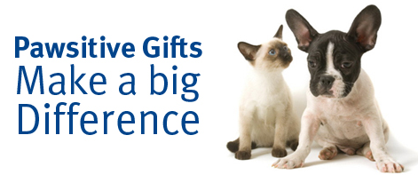 Pawsitive gifts make a big difference dog and cat