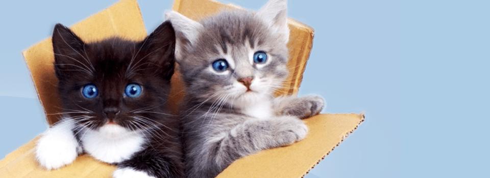 Okanagan Humane Society - Aries Accounting collectiong pet food donations 2015