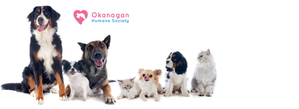 Successful Donations Drive for the Okanagan Humane Society